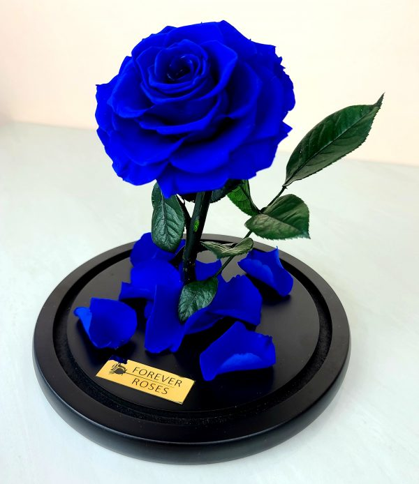 Beauty and the Beast Rose, Blue Eternal Rose in Dome