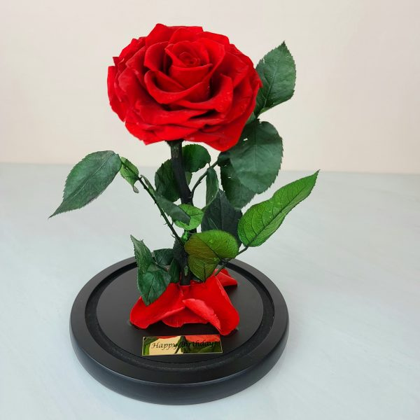 Beauty and the Beast rose - Red