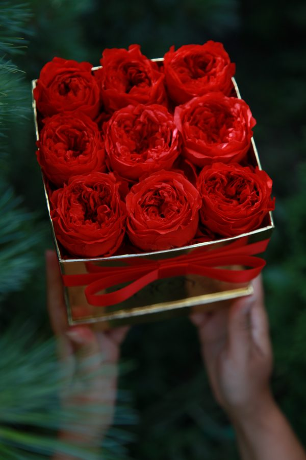 Red forever peonies in gold box