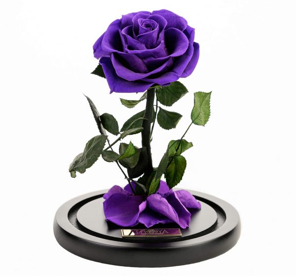 Beauty and the Beast Forever Rose - Dome Rose Purple