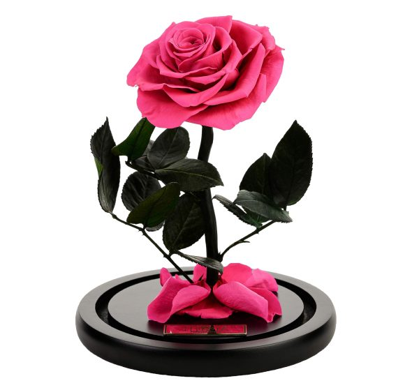 beauty and the beast pink rose in glass