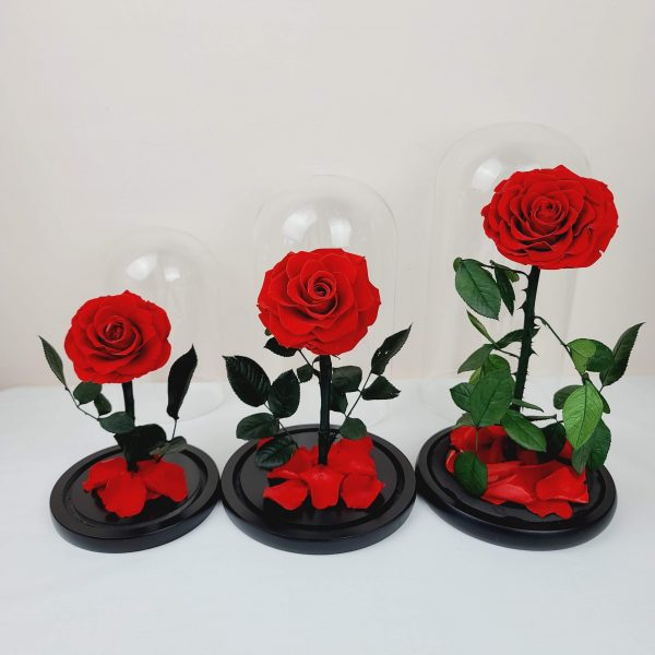 Red Dome Roses - small, medium, royal
