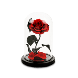 Dome Rose