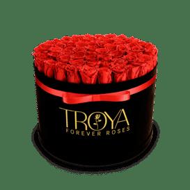 Red Forever Roses