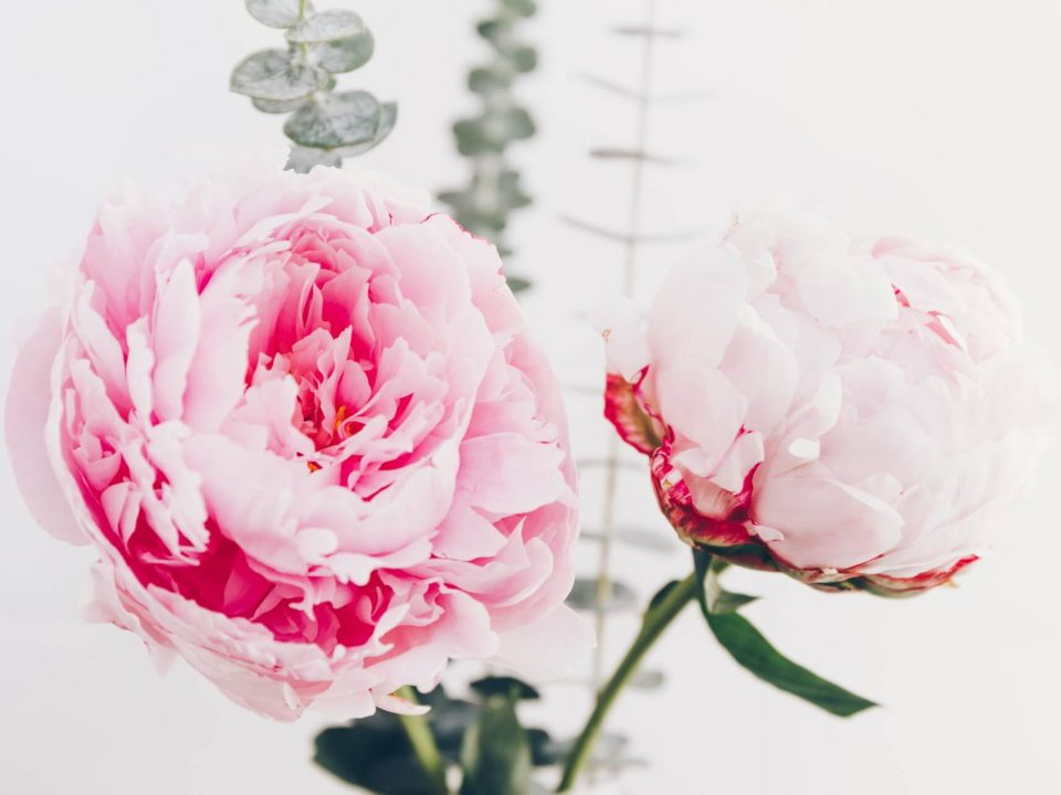 Peony Bouquet is a Perfect Present. Where to buy peonies? 4